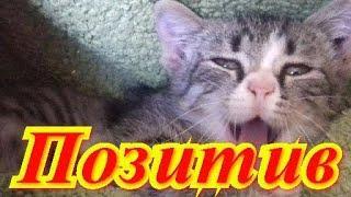 Смешные коты. Позитив.Создай себе хорошее настроение