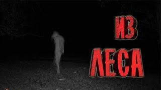 Страшные истории на ночь - Из леса. Жуткие мистические страшилки. НЕ СПАТЬ!