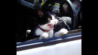 Позитив. Забавные кошки. Создай себе хорошее настроение