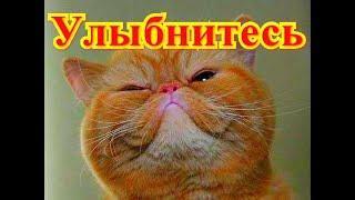 Забавные животные. Кошки. Позитив.Создай себе хорошее настроение