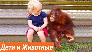 Дети и животные видео приколы | Смешные животные до слез лучшее /Животные в первый раз видят детей