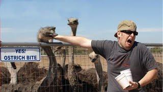 смешные животные пугает людей реакция   ЛУЧШИЕ ПРИКОЛЫ 2020 Смешные Животные 2020 Funny Animals