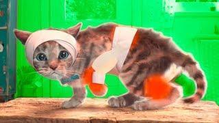 Мой маленький котик мультфильм игра для маленьких детей про котят! Приключения маленького котенка