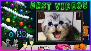 Лучшие видео недели   Best videos of the week   №50 от SUPERKAKTYS