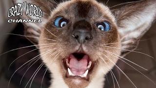 СМЕШНЫЕ КОТЫ И КОШКИ 2017 ПРИКОЛЫ С КОТАМИ И КОШКАМИ 2017 FUNNY CATS Compilation 2017 #38