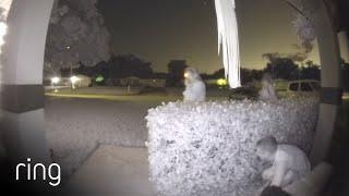 Prank on Mom Caught on Ring Video Doorbell Pro | Ring TV