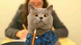 Приколы с котами   Магия и Коты и смешная озвучка животных!!!