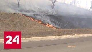 Леса в огне: ветер мешает тушить пожары в Приамурье - Россия 24