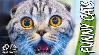 СМЕШНЫЕ КОТЫ И КОШКИ 2017 ПРИКОЛЫ С КОТАМИ И КОШКАМИ 2017 FUNNY CATS Compilation 2017 #41
