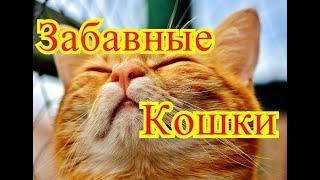 Забавные кошки. Позитив. Создай себе хорошее настроение