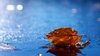 Мелодия спокойствия... Спокойная инструментальная музыка под звуки дождя...