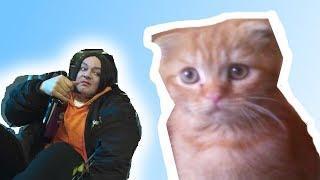Котенок смотрит клип цвет настроения синий Киркоров