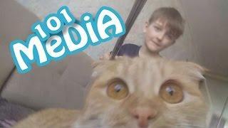 Приколы 2017 МАЙ про животных смешные животные коты и кошки собаки котята мои питомцы моя собака