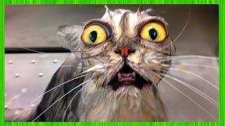 СМЕШНЫЕ КОТЫ И КОШКИ 2017 ПРИКОЛЫ С КОТАМИ И КОШКАМИ 2017 FUNNY CATS Compilation 2017 #37