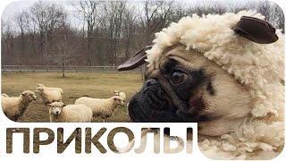 ЛУЧШИЕ ПРИКОЛЫ #48 СМЕХ ДО СЛЕЗ (Подборка Приколов)