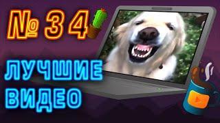 Лучшие видео недели   Best videos of the week   №34 от SUPERKAKTYS