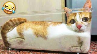 СМЕШНЫЕ ЖИВОТНЫЕ 2021 / ПРИКОЛЫ КОТЫ СОБАКИ, ЛУЧШИЕ ПРИКОЛЫ с Кошками и Собаками Funny Cats