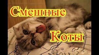 Смешные коты. Позитив. Создай себе хорошее настроение