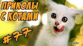 Смешные кошки и коты Видео Приколы про котов и кошек 2017 Funny Cats Compilation