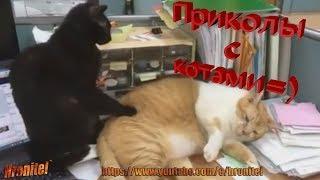 Смешные приколы про котов и кошек!Забавное видео с животными!Funny about cats and cats! Funny video