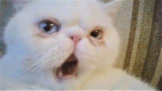 Смешные кошки коты и собаки 2018 Видео Приколы про кошек Приколы про собак Приколы с животными 2018