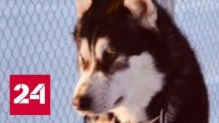 Житель Миннесоты застрелил соседскую собаку по кличке Дональд Трамп - Россия 24