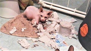 Приколы с животными 2018 Смешные Животные на Видео Собаки приколы Кошки приколы и другие Животные