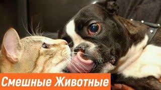 Приколы с животными / Смешные животные / Новые приколы 2020 / Эти милые животные /Видео про животных
